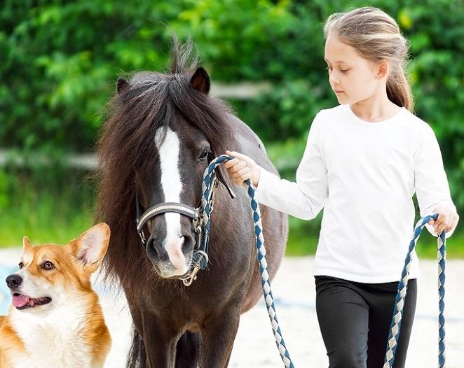 E20 - Médiation par l'animal en établissements de soin – avec l'équidé - CODE CPF : RS5287