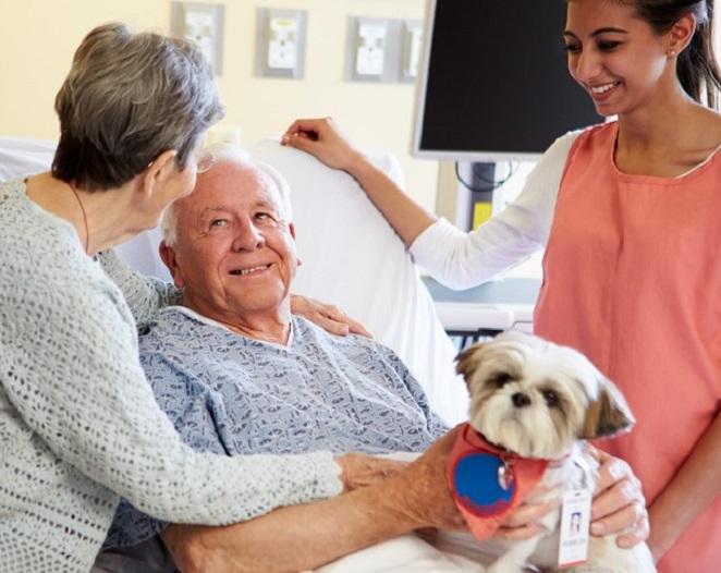 PA18 - Formation Certificat de Capacité médiation par l'animal auprès des personnes âgées Code CPF 236098
